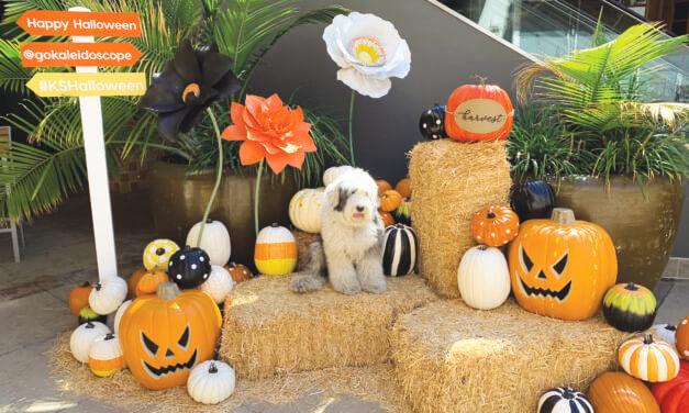 Kaleidoscope Hosts a Haunty Halloween with Jack & Sally on October 26
